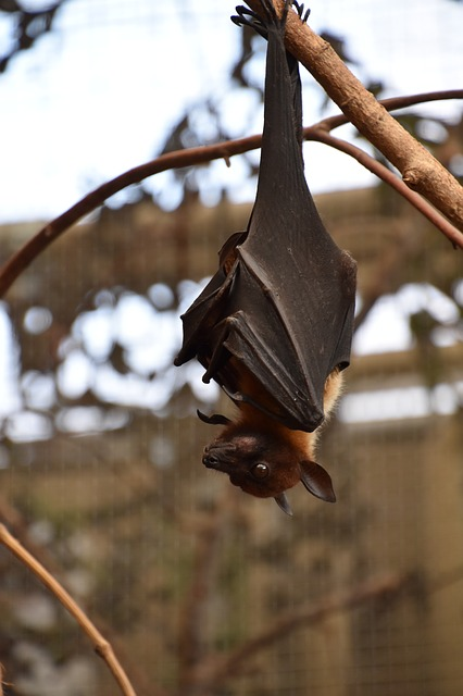 Why Bats Aren't As Scary As They Seem
