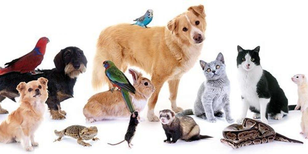 دراسة جدوى فكرة مشروع تجارة الحيوانات الأليفة 2021