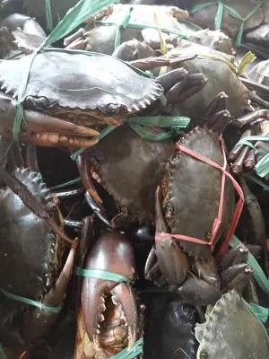 Memancing Ikan Di Air Tawar February 2018