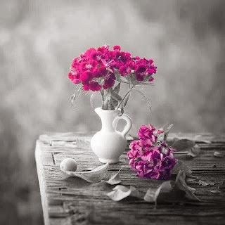 عشاق الورد صور زهور