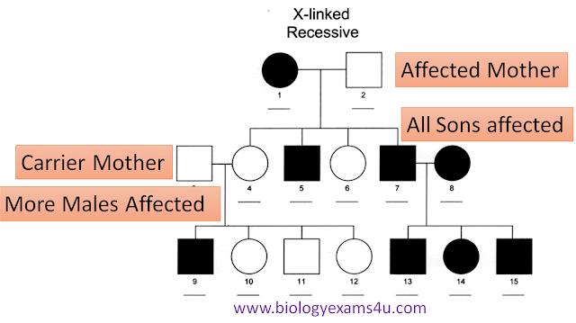 X-Linked Recessive Disorder charcteristics