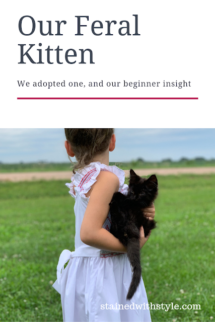 what to look for when adopting a cat, feral kitten adoption, travel with a kitten, how to choose a kitten, stray kitten diseases, cat lice,