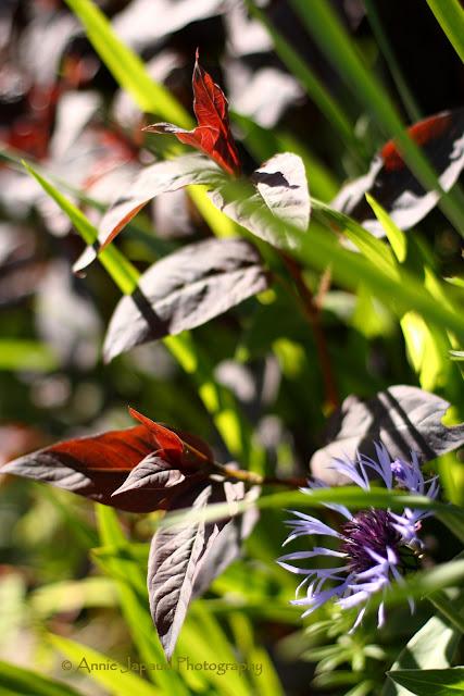 lovely flowers in the sunlight