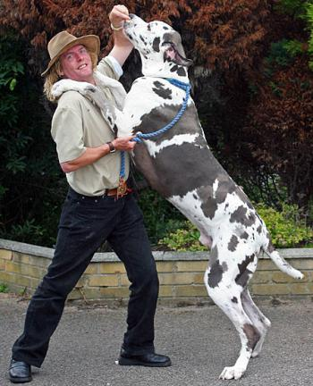 Great Dane Dog Care