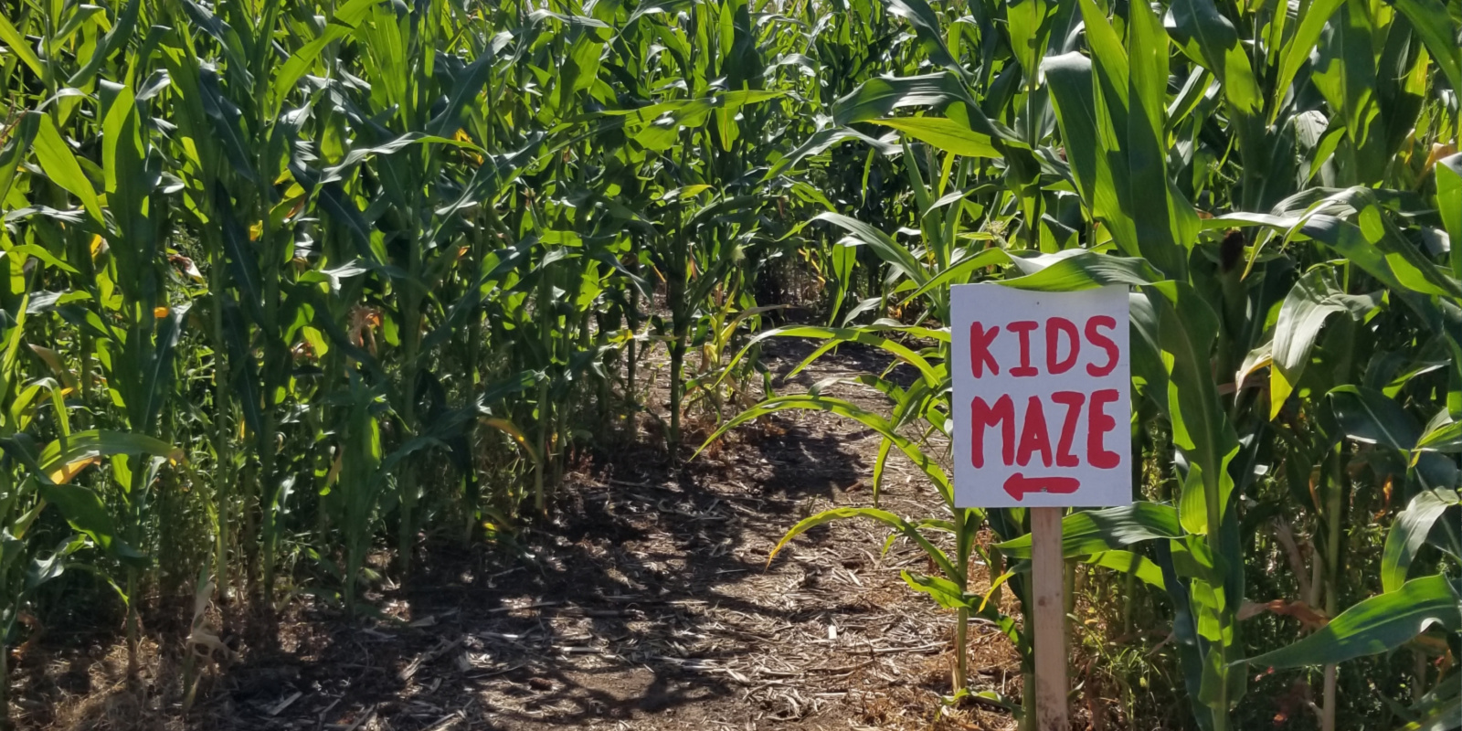 Corn Maze & Bocce Ball at Saskatoon Italian Cultural Centre