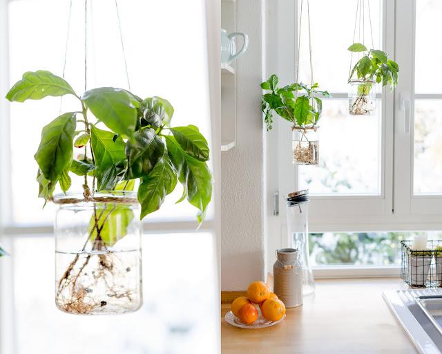 Urban Jungle, Grünes Wohnen, Pomponetti, Kaffepflanzen