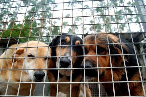 perreras municipales en España