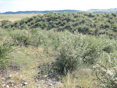 Colorado Front Range foothills