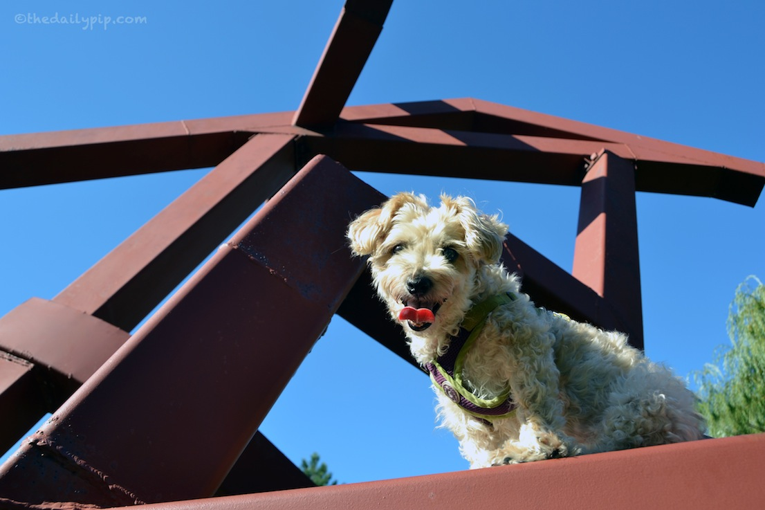 Ruby checks out the art at the dog-friendly Skokie Northshore Sculpture Park