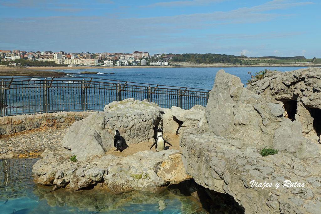 Zoo marino de la Península de la Magdalena, Santander