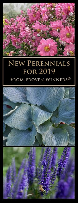 New Perennials for 2019 from Proven Winners