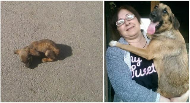 Неравнодушные женщины спасли беспомощного щенка:Он отчаянно боролся за жизнь