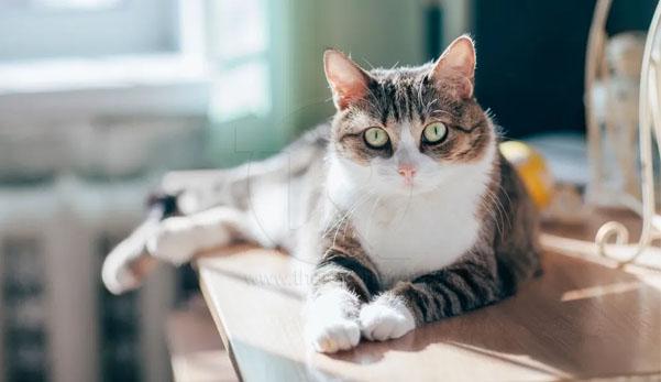 Kucing peliharaan disahkan positif COVID-19, selepas berjangkit dari pemiliknya