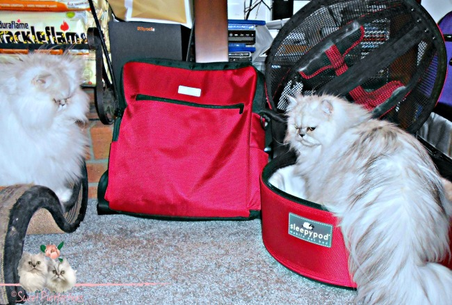 Persian cats with sleepypod products