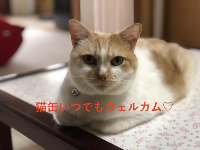 猫缶かも〜ん!