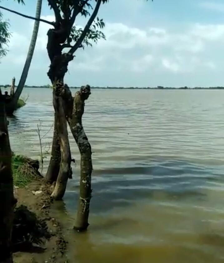 3.800 Hektar Sawah di Kabupaten Bekasi  Gagal Panen