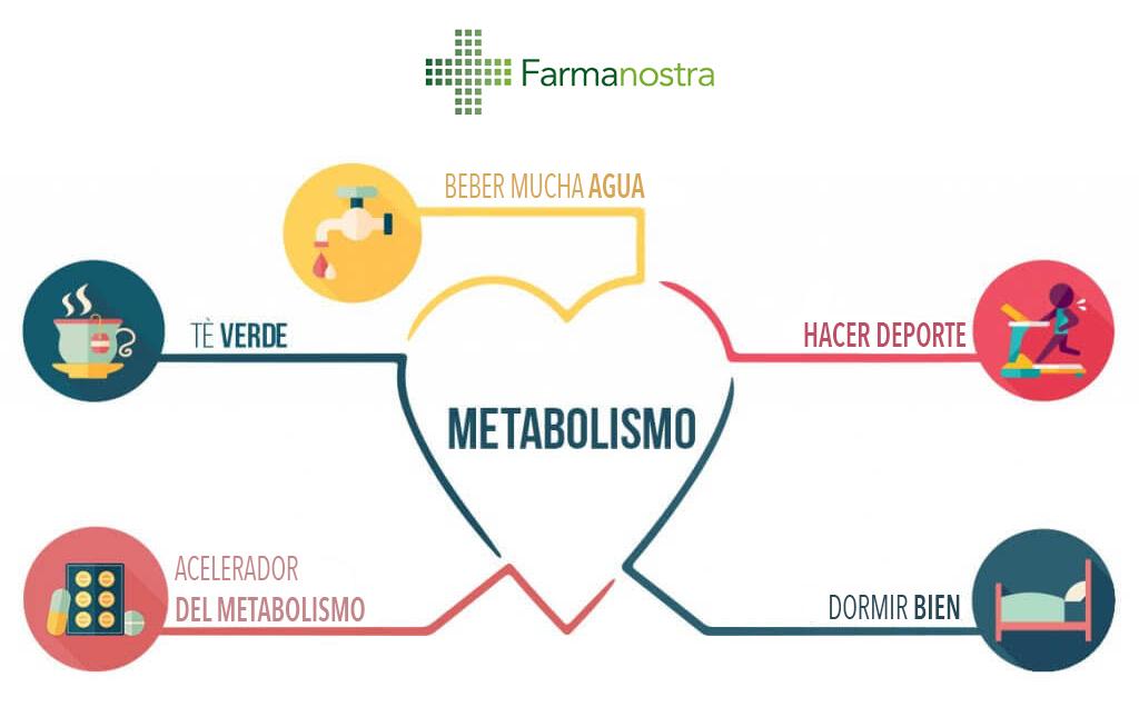 Decir que el metabolismo acelerar quiere
