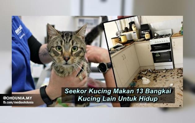 Seekor Kucing Makan 13 Bangkai Kucing Lain Untuk Hidup