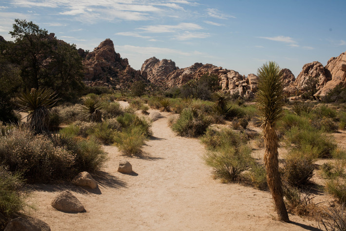 Travel: California diaries - Joshua Tree Park