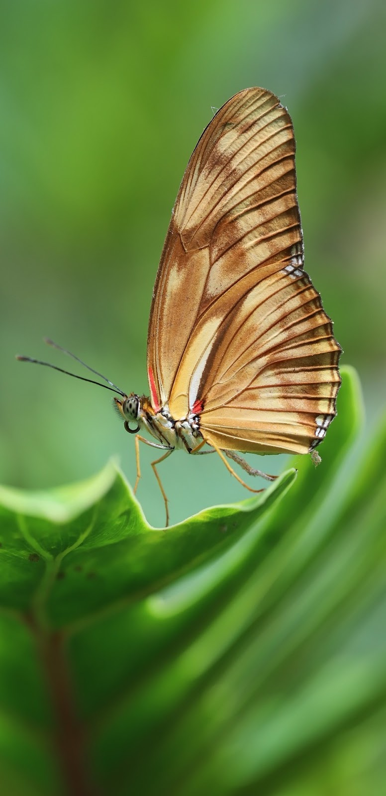 Beautiful brown butterfly.
