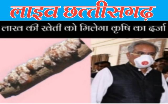lakh ki kheti,news in chhattisgarh in hindi, chhattisgarh news in hindi, hindi news from chhattisgarh, hindi news of chhattisgarh, live news in chhattisgarh,live chhattisgarh news