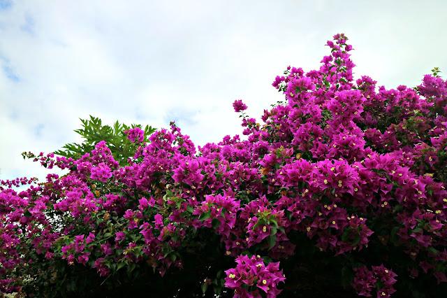 Marian Orchard, Balete Batangas