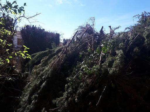 Limpieza de jardín en vivienda abandonada y retirada de residuos por Ruepra Jardinería