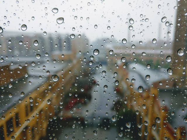 Dew Drops Wallpapers in 4K - Pics-Directory