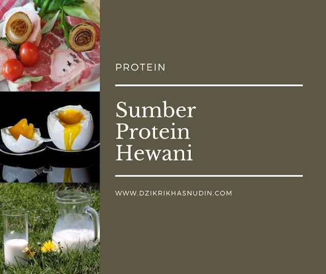 macam-macam sumber protein hewani