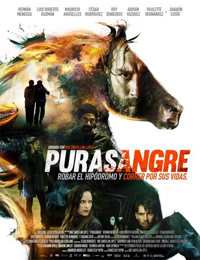 Ver Purasangre (2016) Online