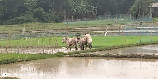 Indian Farming in Rain