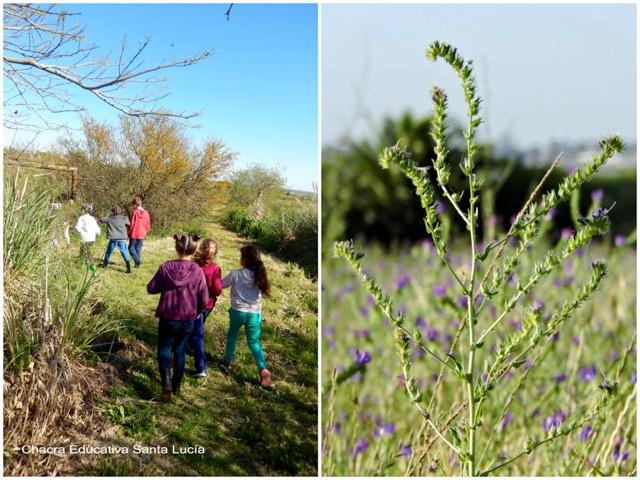 Niños yendo al tajamar / Vegetación de la pradera - Chacra Educativa Santa Lucía