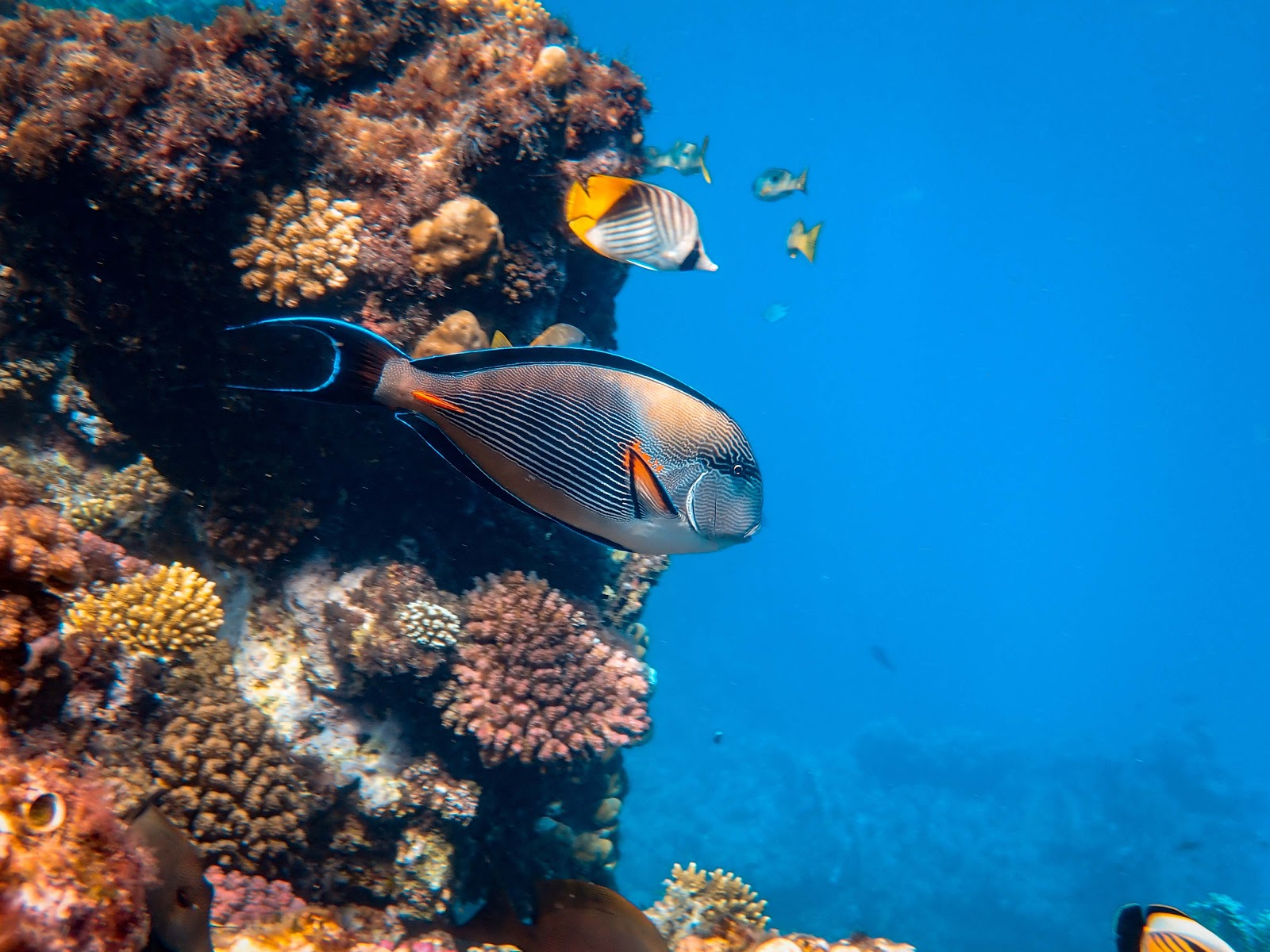 photo-of-fishes-near-coral-reefs-images