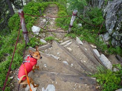 急な階段 フレジェールからプランプラまでツール・ド・モンブランの一部を犬と歩く