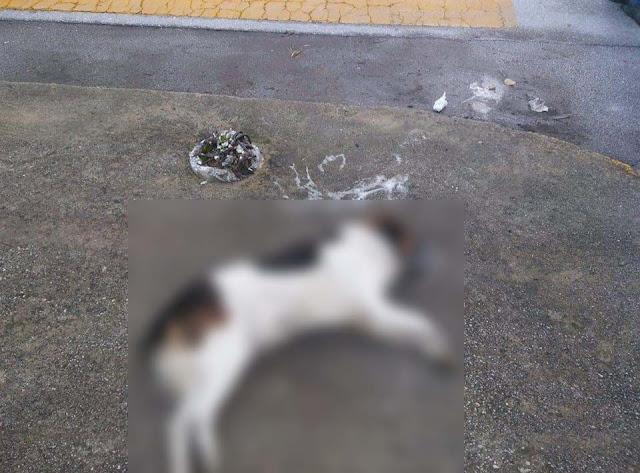 Φόλες στο Ναυπλιο με θύματα δυο ανυπεράσπιστα σκυλιά