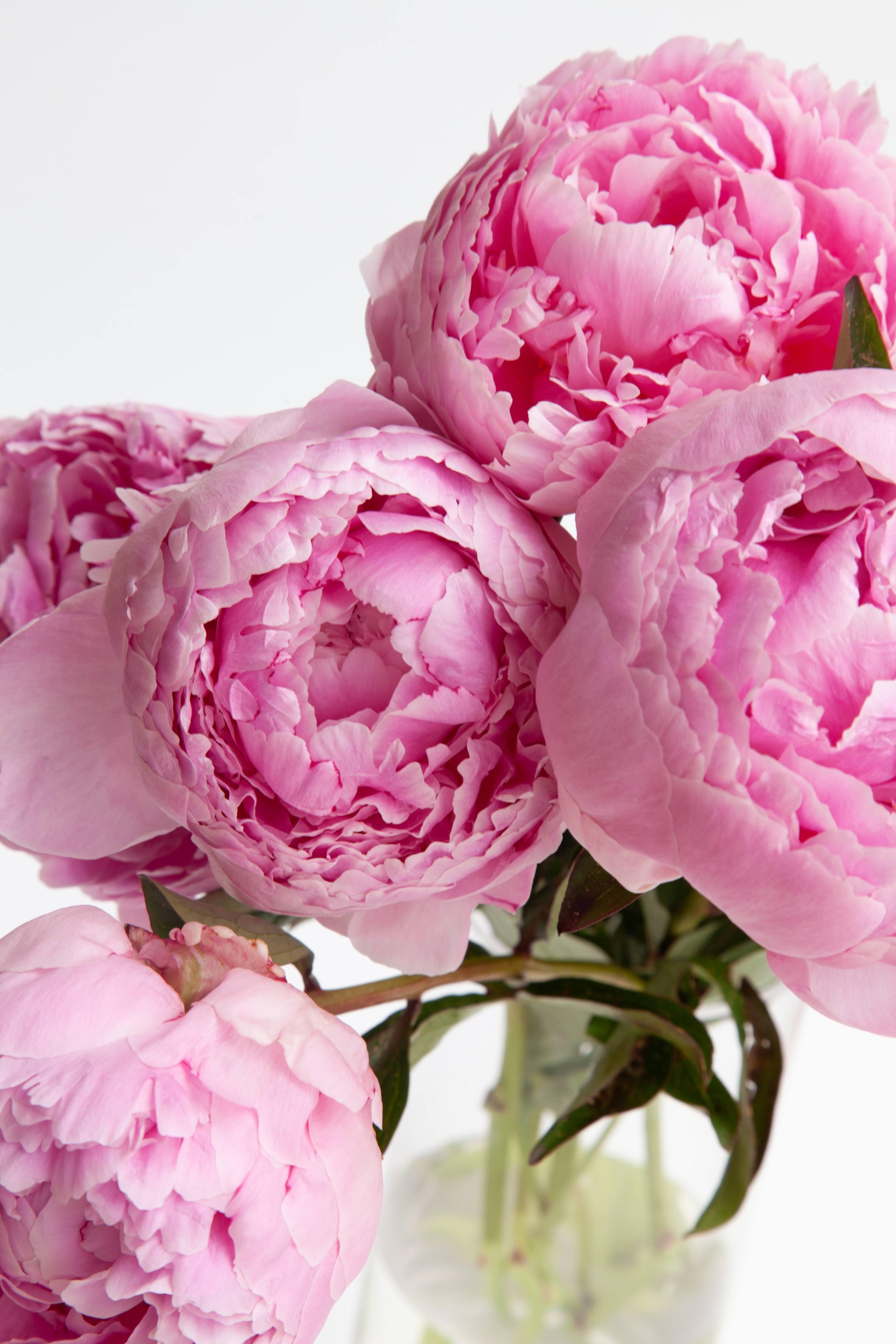 Pink Peonies in Clear Vase | Photo by Rebecca Lee Creative via Unsplash