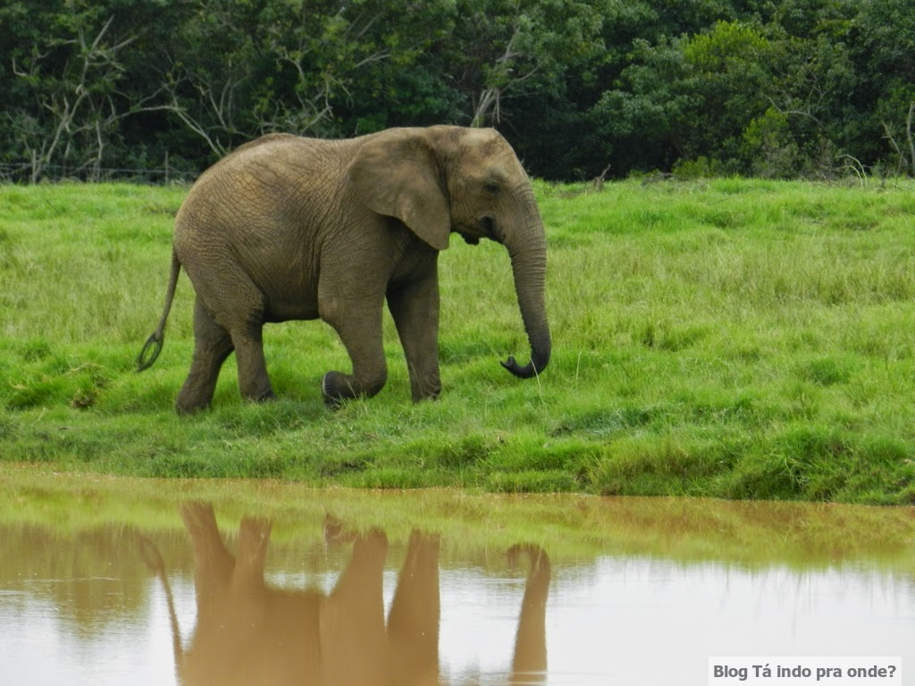 Elephant Sanctuary, The Crags em Plettenberg Bay