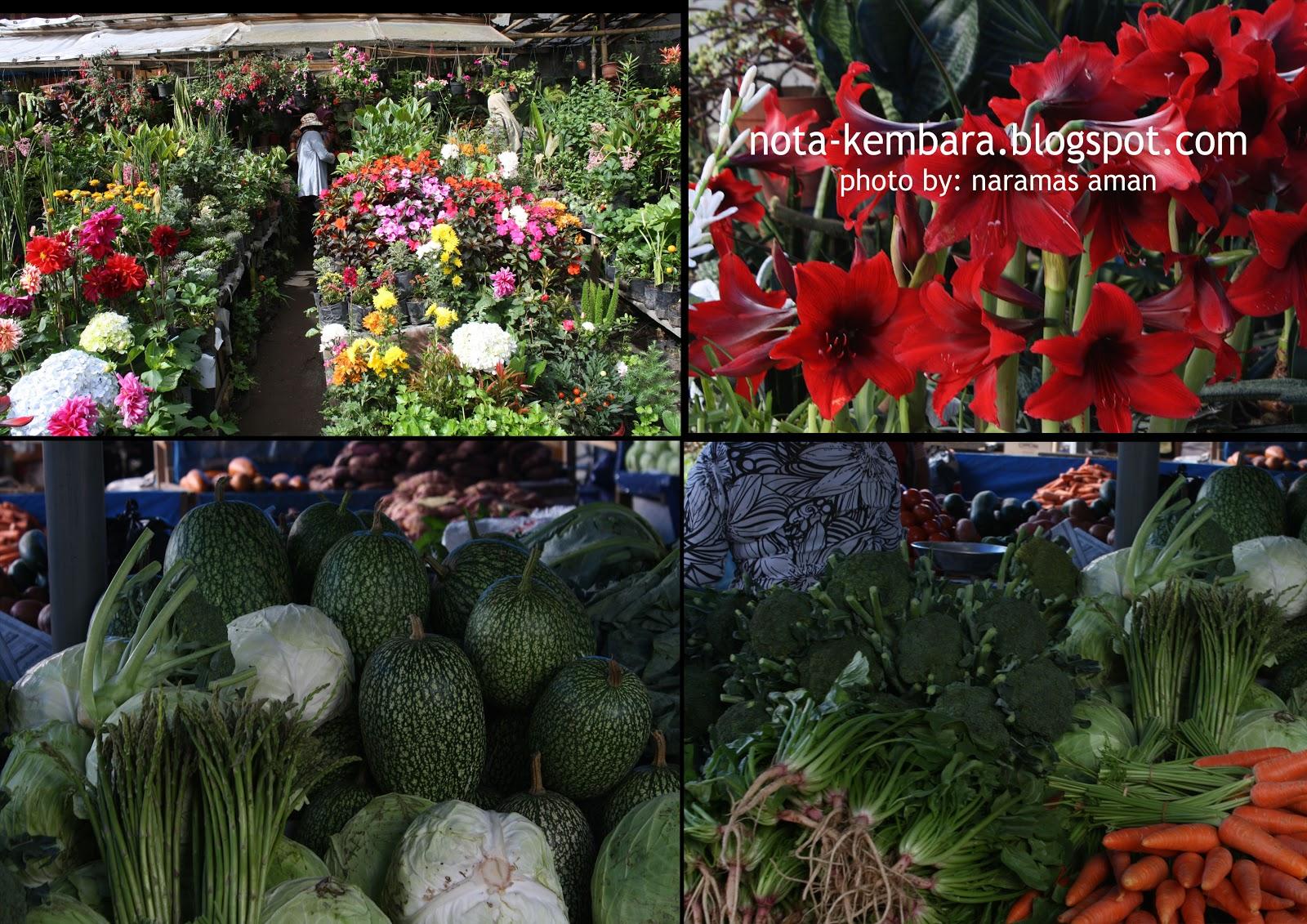 Berastagi  3  Shopping Buahbuahan dan Sayursayuran Segar