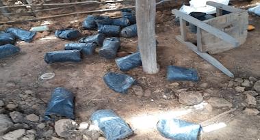 Polícia Civil apreende mais de 17 kg de maconha na zona rural de Cabrobó