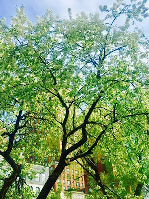 NYC acupuncture in Spring