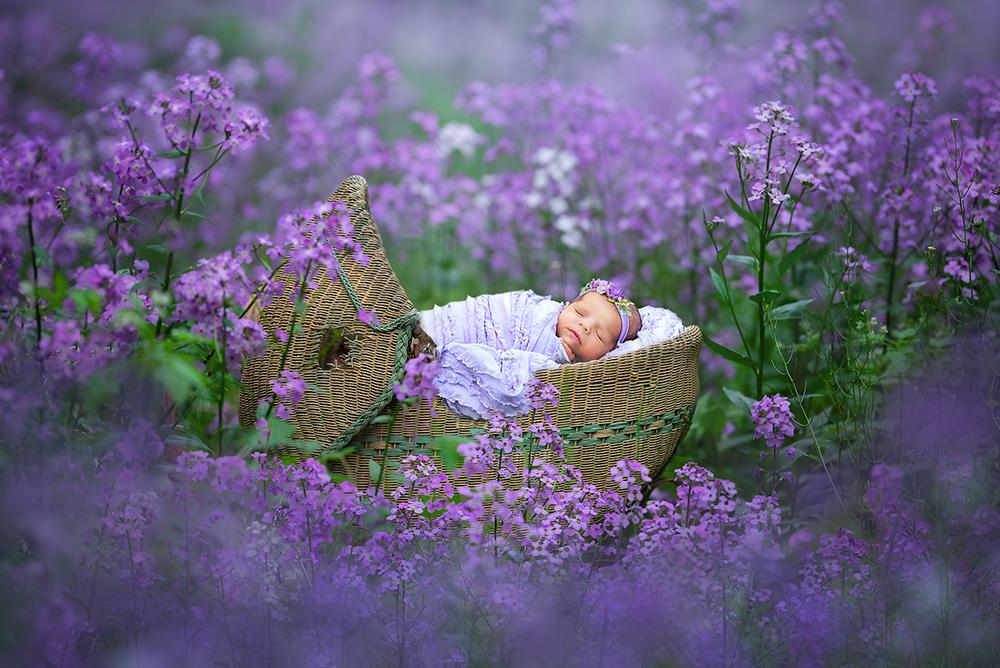 purple and lavender phlox field outdoor newborn session DeKalb Sycamore IL