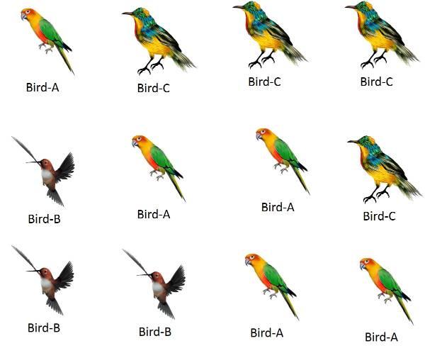 Species biodiversity - richness-biodiversity-genetic biodiversity