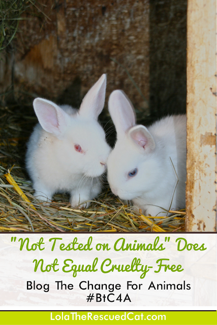 Blog The Change|cruelty-free|animal testing