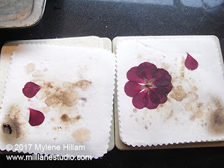 Pinks and purples tend to darken when they are pressed in the microwave.