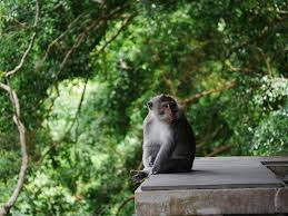 Ubud Monkey Forest, Top 10 Things To Do In Bali