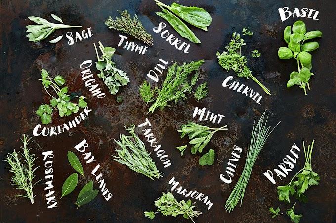 Ayurvedic Medicine For Piles
