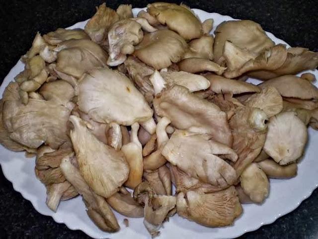 Receita de macarrão com cogumelos ao molho de queijo