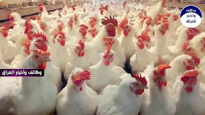 """علنت وزارة الزراعة ، الثلاثاء 19-1-2021، السيطرة على بؤرة انتشار انفلاونزا الطيور في محافظة صلاح الدين.  وقال المتحدث باسم الوزارة حميد النايف إن """" تم السيطرة وحصر الوباء في منطقة تبلغ مساحتها 3 كم وتوسعت جهود حصره إلى 10 كم ضمن ضمن قضاء سامراء لنضمن عدم انتشار المرض خارج هذه الرقعة"""".  وأضاف """"اليوم كان لنا اجتماع في صلاح الدين مع المسؤولين المحليين في المحافظة وقد تم الاتفاق على اتخاذ جميع التدبيرات ونطمئن المواطنين بشراء الدجاج ومنتوجاته ولايوجد أي خطر"""".  ولفت إلى أن """"بعض المحافظات أغلقت حدودها لمنع دخول الدجاج ومنتوجاته كاجراء احترازي تحوطا ولا يوجد أي تبليغ حكومي رسمي بذلك وهو اجراء خاص لكل محافظة خوفا من دخول الدجاج المهرب من خارج العراق القادم من إقليم كردستان"""".  واشار إلى إنه """"تم تبليغ كل أصحاب الدواجن بضرورة الحراسة وابعاد جميع الطيور المهاجرة عن دواجنهم وباي طريقة حتى وأن وصل الأمر باطلاق العيارات النارية"""".  وأعلن محافظ صلاح الدين عمار جبر خليل عن إصابة 60 ألف دجاجة في قضاء سامراء بفيروس إنفلونزا الطيور المعروف علميا بـH5N5، محذرا من تحوله لـH5N1 الذي قد ينتقل بين البشر.  وقال خليل، إن """"60 ألف دجاجة من النوع البياض أصيبت بإنفلونزا الطيور داخل موقعين في قضاء سامراء، وقامت الفرق الصحية المختصة باتخاذ الإجراءات اللازمة وإعدام الطيور المصابة"""".  ودعا الفلاحين في المحافظة إلى """"الانتباه واتخاذ ما يلزم، كون هذا الفيروس الذي أصاب الدواجن هو H5N5 وقد يتحول إلى H5N1"""".  وأشار إلى أن """"الفيروس الأخير قد ينتقل بين البشر، ولذلك سنتخذ إجراءات فورية لمعالجة الموقف والقضاء على الفيروس"""".  قالت وزارة الزراعة العراقية، الاثنين، في بيان إن العدوى انتقلت إلى الدجاج من طيور برية أتت من خارج البلاد.  وقال المتحدث باسم الوزارة حميد نايف: """"تم عزل الدجاج وتعقيم المتاجر وطوقنا المنطقة، اتخذنا إجراءات للحد من دخول أي دجاجة من سامراء إلى محافظات أخرى"""".  وأشار إلى أنه لا يمكن عمل الكثير، موضحا """"لا يوجد لقاح لإنفلونزا الطيور في العراق لأن المرض لا ينتشر كل عام. العام الماضي لم نلاحظ تفشي المرض بينما قبل عامين كان أكبر بكثير من هذا العام"""".  وتؤمن الزراعة واحدة من كل 5 وظائف في العراق و5 بالمئة من الناتج المحلي الإجمالي الذي يهيمن عليه قطاع النفط.  وتسبب الانخفاض التاريخي لأسعار النفط الخام في"""