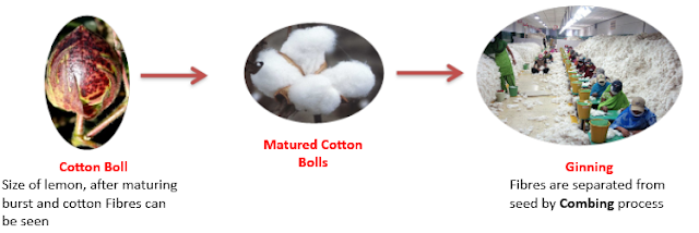 Cotton Flower to Cotton Fibres, NCERT Class 6 Science Fibre to Fabric, cotton boll, charkha
