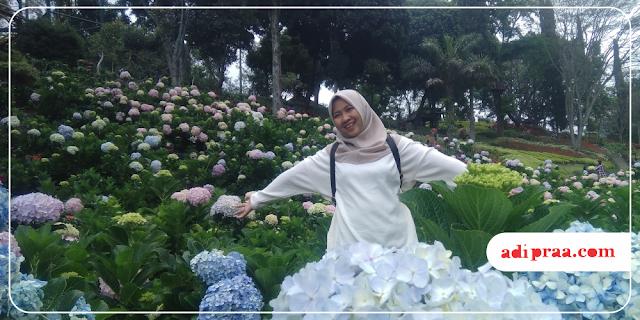 Berfoto dengan Bunga Hortensia di Taman Rekreasi Selecta | adipraa.com